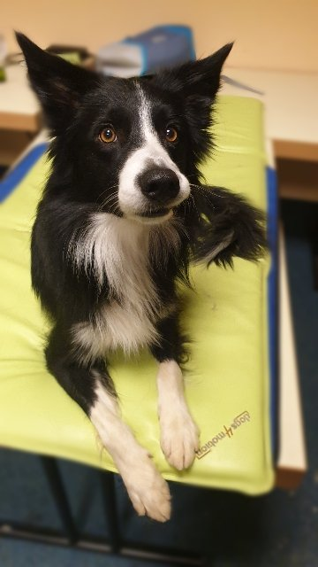 Sykes bei Dogs4motion zum check-up